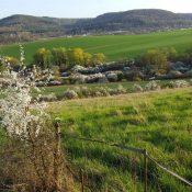 Kleine Fluchten 2021: Yoga & Natur – Wochenenden in der Pfalz