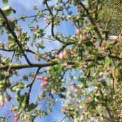 Frühlingsmüdigkeit ade: Kurse ab Mai